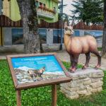 Parco in Miniatura riproduzione del camoscio appenninico